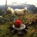 Prairie pan in Noorwegen