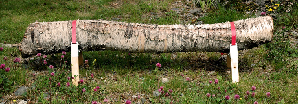 Bosbank in tuin